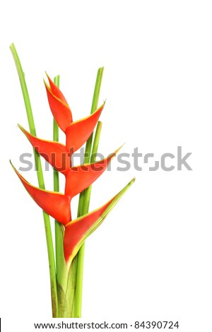 Heliconia Flower - stock photo