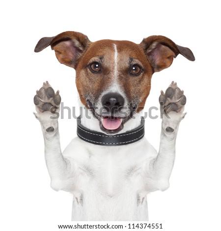 hello goodbye high five dog - stock photo
