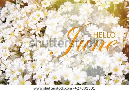 Hello June Wallpaper Summer Garden Background White Flowers