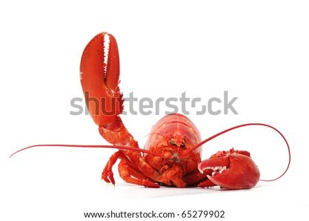 hello lobster - stock photo