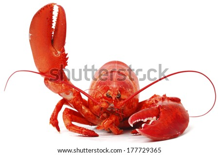 Hello lobster isolated on white background - stock photo