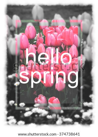 HELLO SPRING SLOGAN WITH TULIPS - stock photo