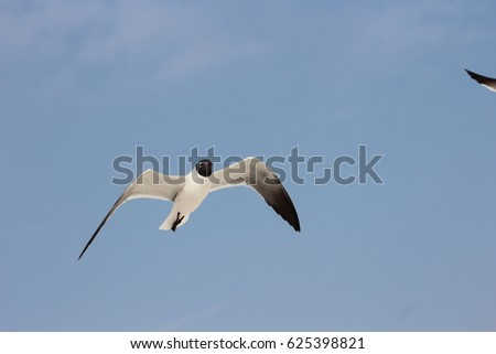 HELLO SPRING, WATCHING SEAGULL FLYING ON SKY enjoy holiday at Pensacola beach Florida.