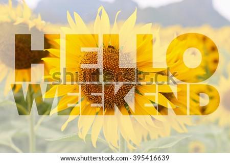 Hello Weekend word on sunflower background - stock photo