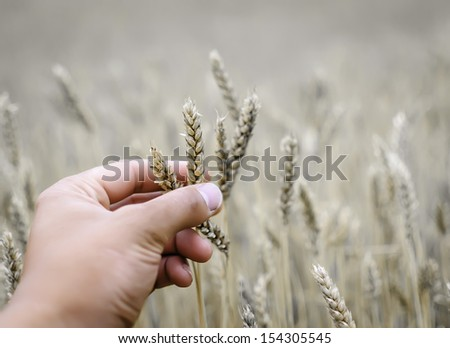 helping hand to dry wheat during drought - stock photo