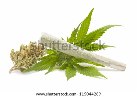Hemp (cannabis) - stock photo