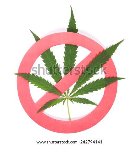 Hemp (cannabis) drugs interdiction on white background - stock photo