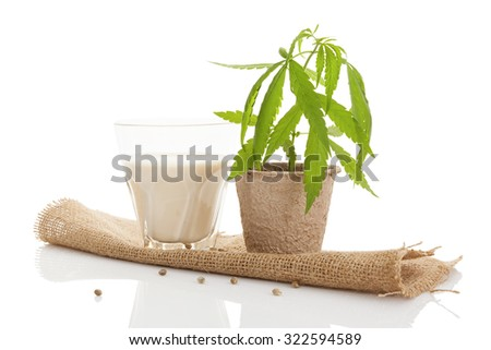 Hemp milk and young cannabis plant isolated on white background. - stock photo