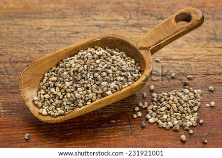 hemp seeds on a rustic wooden scoop against grunge wood table - stock photo