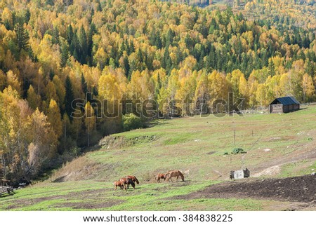 Hemu Village in autumn, Xinjiang China
