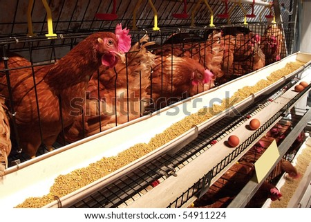 Hen house business in Thailand - stock photo