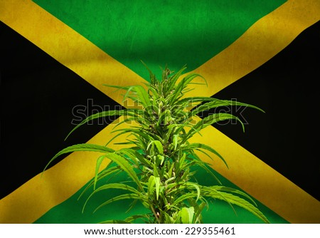 Hennep plant on jamaican flag - stock photo