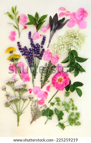 Herb and flower selection used for medicinal and culinary purposes over mottled cream background. - stock photo