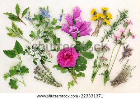 Herb and flower selection used in herbal and naturopathic medicine over mottled cream background. - stock photo