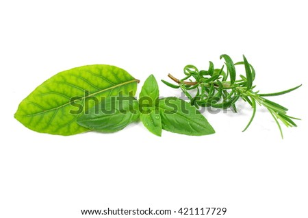 herb basi rosemary and laurel on white background - stock photo