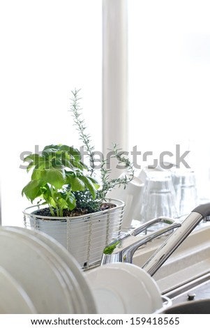 Herb cultivation of bright kitchen - stock photo