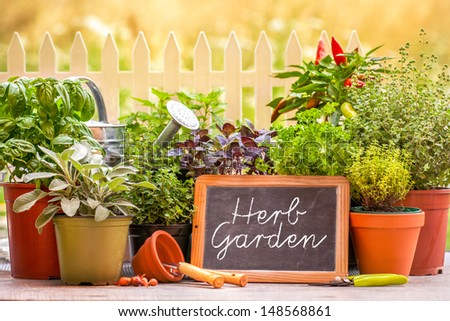 Herb garden at home yard in with pots of herbs in front of fence - stock photo