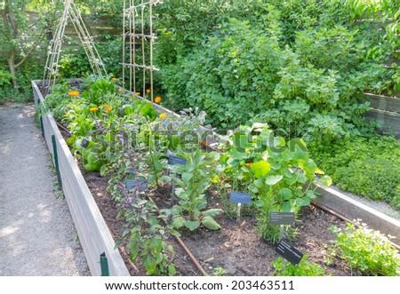 Herb Garden in Wooden Frame - stock photo
