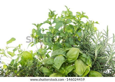 Herb Garden isolated on white background - stock photo