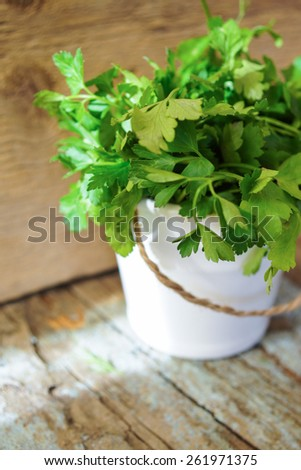 Herb gardening still life of parsley plants by sunlit kitchen window - stock photo