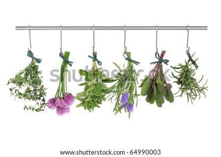 Herb leaf and flower  bunches of thyme, chives, oregano, lavender, sage and rosemary hanging and drying on a stainless steel pole, isolated over white background. - stock photo