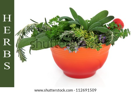 Herb leaf and flower sprigs in a red ceramic mortar with pestle over white background, with title description on green. - stock photo