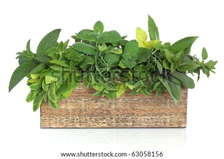 Herb leaf mixture in a rustic wooden plant box including rosemary and bay and varieties of mint, oregano and sage, isolated over white background. - stock photo