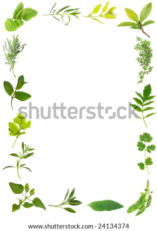 Herb leaf selection forming a frame over white background. Including valerian, valium substitute.