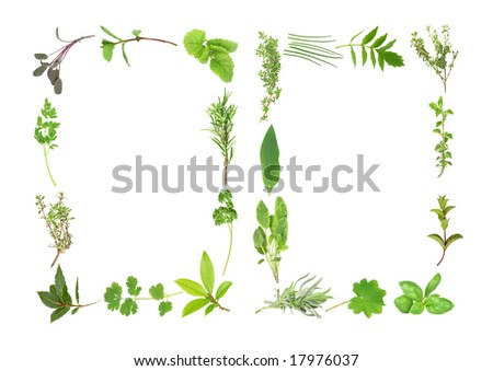 Herb leaf selection forming two borders. Over white background. - stock photo