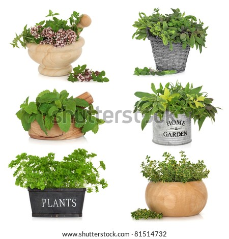Herb leaf selection in various containers including, thyme, sage, parsley, oregano and lemon balm, isolated over white background. - stock photo