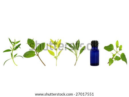 Herb leaf sprigs of hyssop, chocolate mint, golden marjoram, sage, and bergamot and aromatherapy essential oil glass bottle, over white background. - stock photo