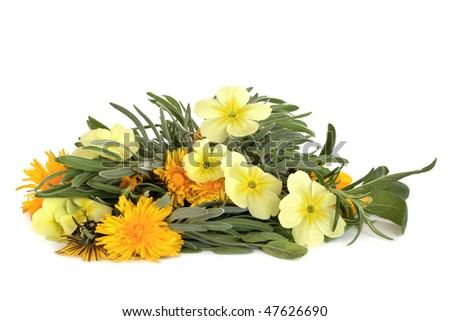 Herb leaf sprigs of lavender, rosemary and sage with wild primrose and dandelion flowers, isolated over white background. Skincare ingredients. - stock photo