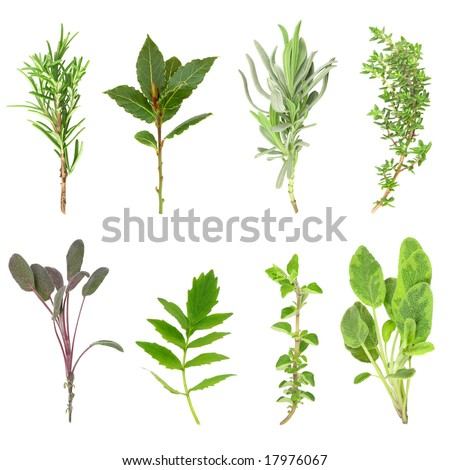 Herb leaf sprigs of rosemary, bay, lavender, thyme, purple sage, valerian, (vallium substitute) oregano and variegated sage over white background.  In order from top left to right. - stock photo