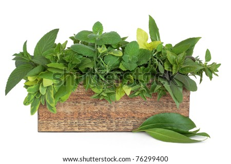 Herb leaf sprigs of rosemary, bay, oregano, golden marjoram, mint varieties, variegated and purple sage  in an old rustic wooden  box, isolated over white background. - stock photo