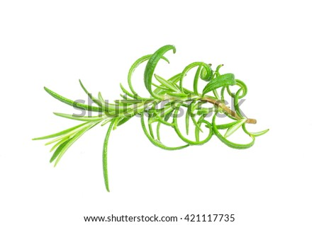 herb rosemary on white background - stock photo
