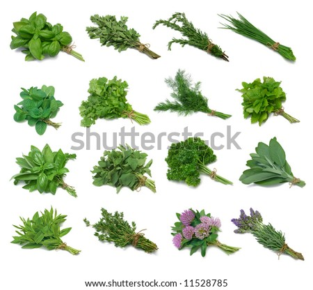 Herb Series Sampler - from top left: Basil, Marjoram, Rosemary, Chives, Mint, Cilantro, Dill, Lemon Balm, Mixed, Oregano, Parsley, Sage, Spearmint, Thyme, Red Clover, Lavender - stock photo