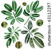 Herbal background - stock photo