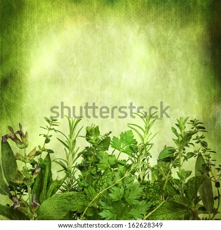 Herbal background, with grunge effects.  Lots of copy space.  Includes sage, mint, spearmint, rosemary, coriander, parsley, oregano and thyme. - stock photo