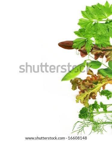Herbal border on a white background - stock photo
