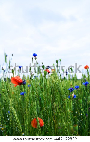 Herbal field flowers.Beauty summertime season. - stock photo
