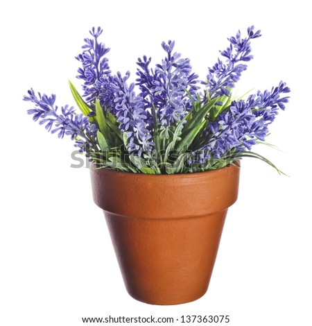 Herbal lavander bouquet in clay flowerpot  isolated on white background - stock photo