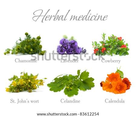 Herbal Medicine: chamomile, lavender, calendula, celandine and St. John's wort isolated - stock photo