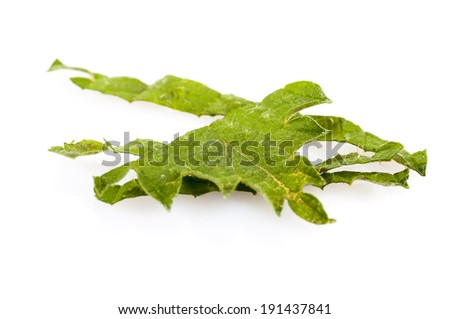 Herbal medicine: Chopped common nettle leaf isolated on white background. Urtica dioica, often called common nettle or stinging nettle.Use as a medicine, as a food source and as a source of fibre. - stock photo