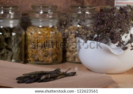herbal medicine : motherwort   	 - stock photo