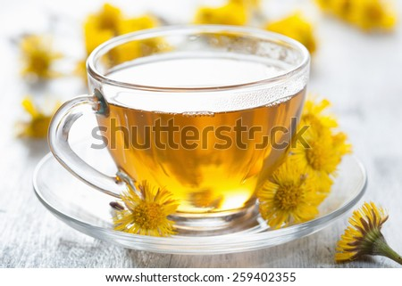 herbal tea with coltsfoot flowers - stock photo