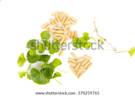 Herbal Thankuni leaves of indian subcontinent, Centella asiatica,gotu kola on white background, - stock photo