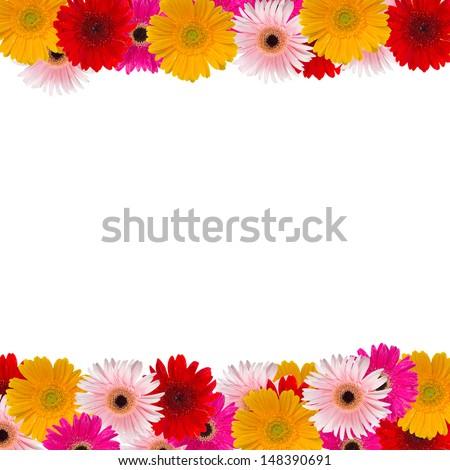herbera flowers frame isolated on white background - stock photo