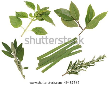 Herbs. - stock photo