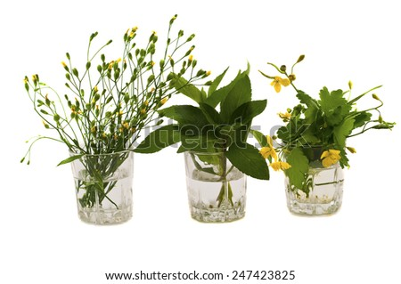 herbs and mint in a glass celandine