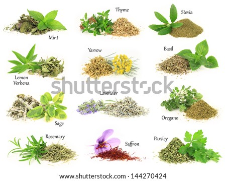 Herbs Spice Collecti